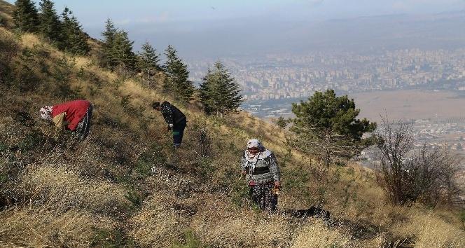 Ali Dağı Kayseri'nin akciğeri olacak