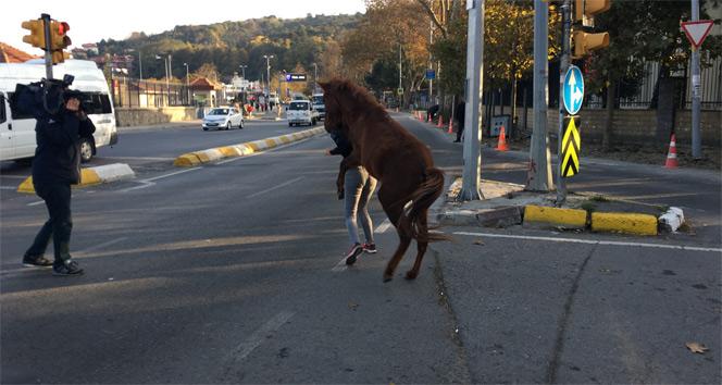 Sarıyer'de başıboş atın vatandaşlara saldırdığı anlar kamerada