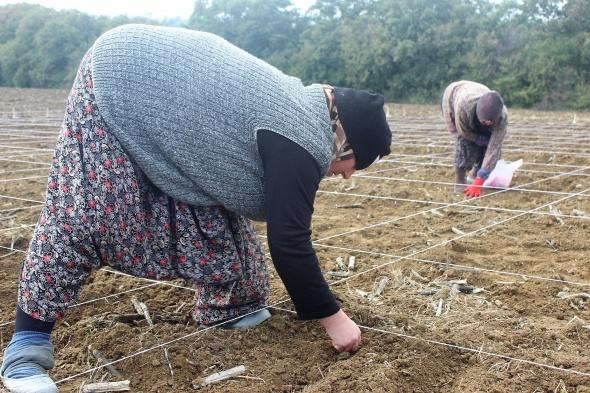 Milli tohumlar kadın eliyle ekiliyor