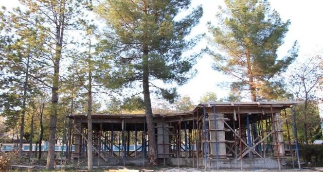 Hani Belediyesi 35 yıllık çam ağacını kesmemek için projede değişiklik yaptı