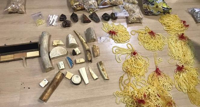 İstanbulda mors dişleri ele geçirildi