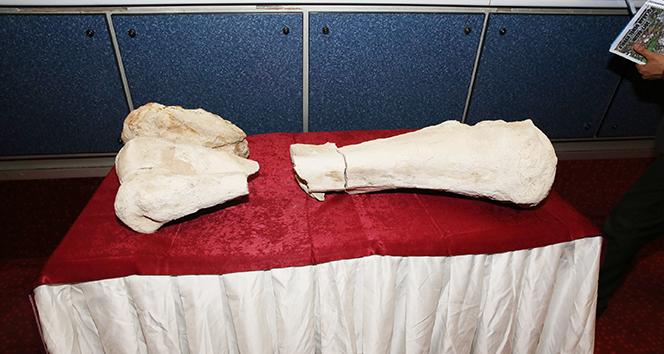 Kayseri'de 10 milyon yıl öncesine ait fosil bulundu