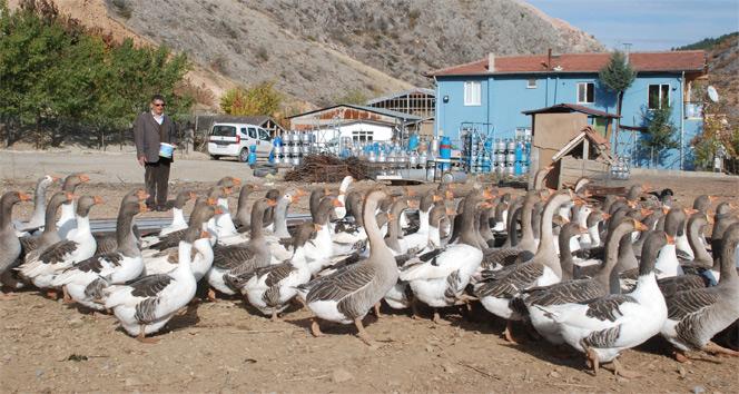 Tüp deposunda hobi olarak başladı, 350 kümes hayvanı besliyor