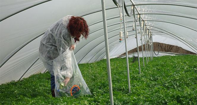 Pestisit nedir? Pestisitin insan sağlığına zararları nelerdir?