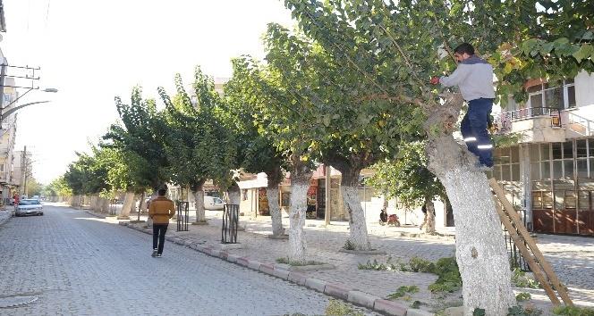 Budanan ağaçlar ihtiyaç sahiplerine yakacak olarak dönecek