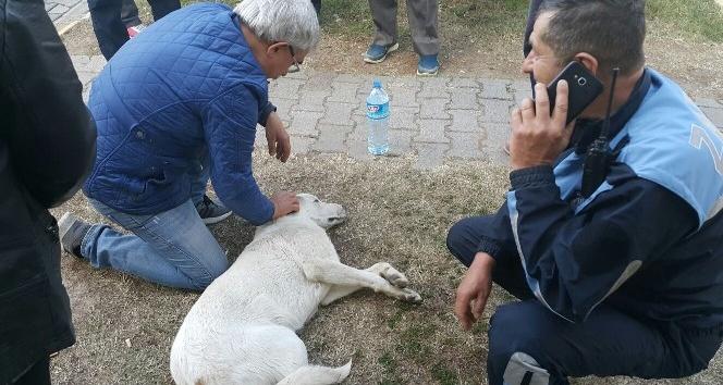 Poliklinikler önünde yarı baygın yatan köpeğin yardımına hastalar koştu