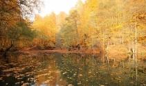 Manisalı fotoğrafçılar sonbaharın renklerini Yedigöller'de fotoğrafladı
