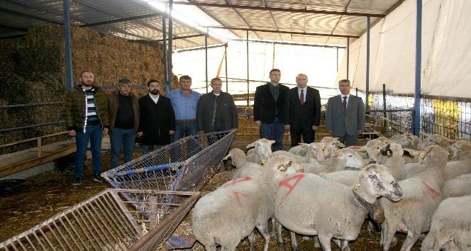 Eski hükümlüler koyun besleyecek