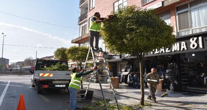 Düzce'de aaçların kışlık bakımları yapılıyor