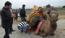 Burhaniyede güreşçi 82 deveye havut giydirildi