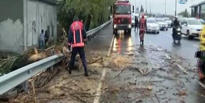 Fırtına nedeniyle otoyola ağaç devrildi