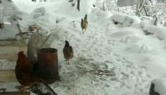 Alaşehirde kar kalınlığı 7 santimetreye ulaştı
