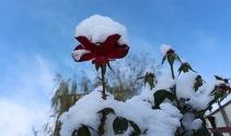 Oltuya yılın ilk karı düştü