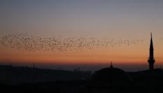 Yozgatta sığırcık kuşlarının görsel şöleni