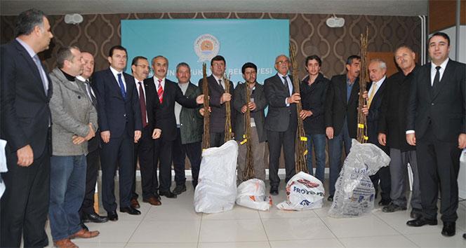 Büyükşehir Belediyesi 2 bin ceviz fidanı dağıttı