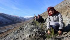 Erzincanda KYKlı gençler gelecek için fidan dikti