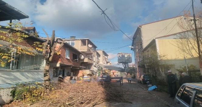 Sultanbeyli'de ağaç budama çalışmaları sürüyor