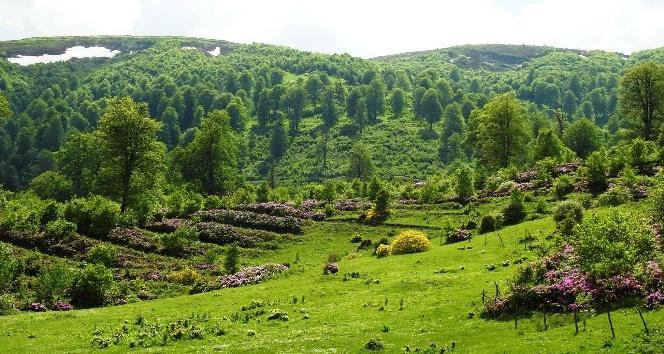 18 bal ormanı tesis edildi