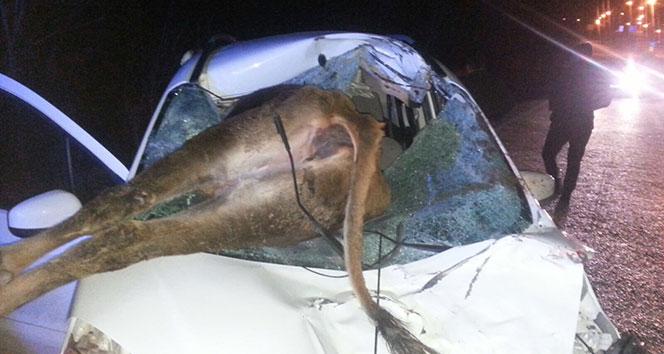 Otomobil ineğe çarptı: 2 yaralı !