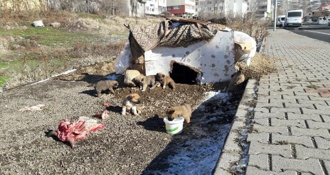 Yavru köpekleri anneleri bıraktı, esnaf sahip çıktı