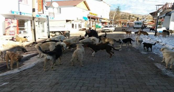 Yayladaki aç köpeklere sahip çıkıyorlar