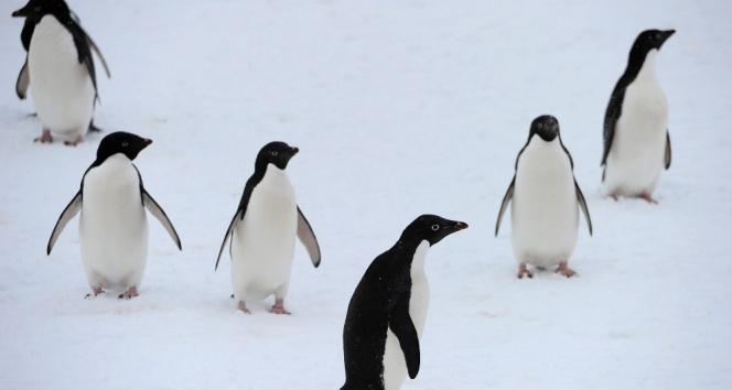 14 bin yıldır Antartikadalar