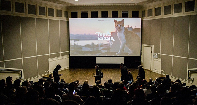 İstanbul kedileri Rus sinemalarında