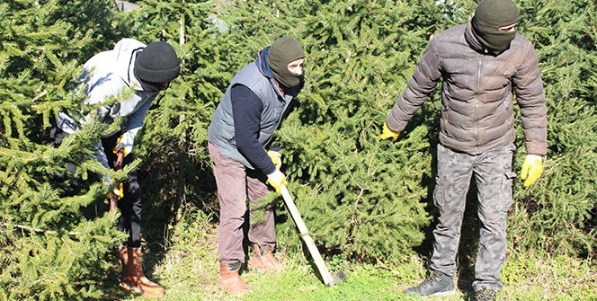İstanbul'da yılbaşı öncesi kaçak çam ağacı operasyonu