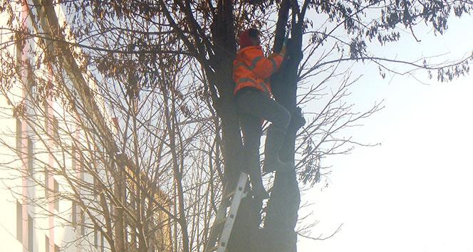 Bilecik Belediyesi ağaç budama çalışması başlattı