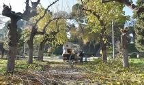 Salihli'de parklara kışlık bakım