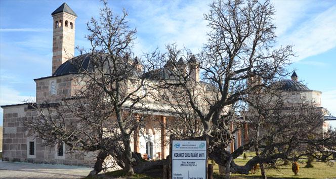 850 yaşındaki karadut ağacı meyve vermeye devam ediyor