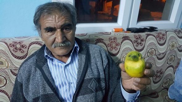 Kuş şeklindeki limon görenleri şaşırttı