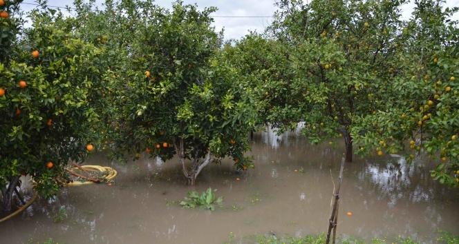Muğlada narenciye bahçesi ve seralar sular altında kaldı