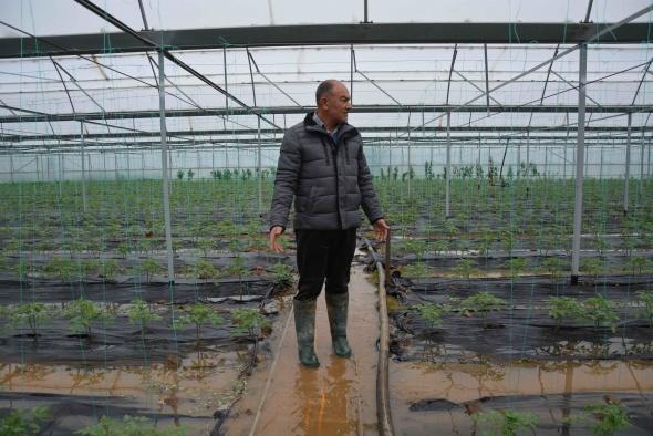 Muğla'da narenciye bahçesi ve seralar sular altında kaldı