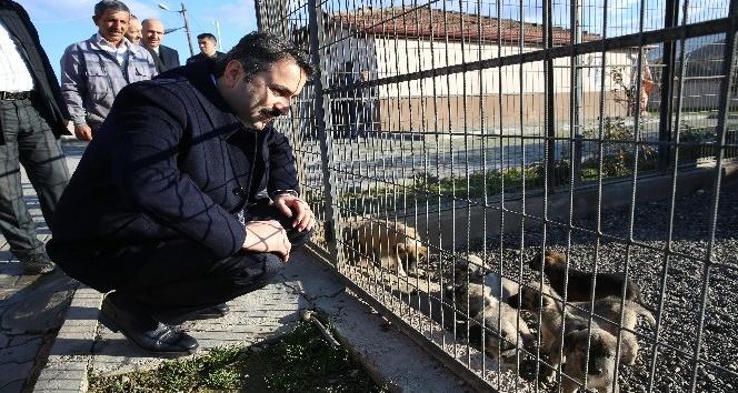 Başkan Eroğlu, hayvanseverleri barınağı gezmeye davet etti