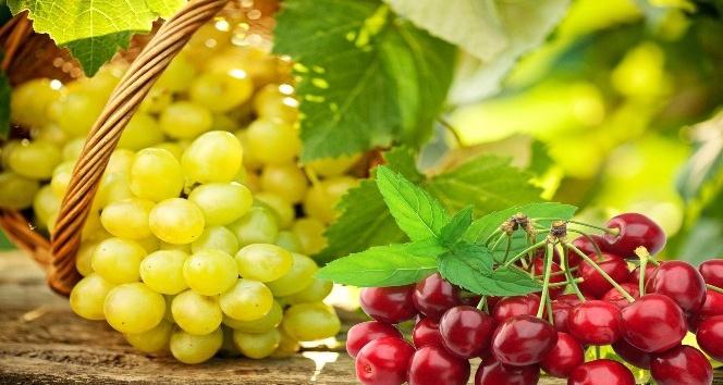 Yaş meyve sebze sektörü ihracatının yüzde 10'unu havadan yapacak