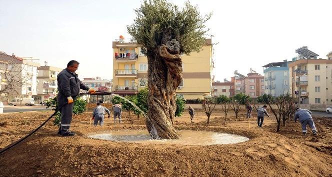 Anadolu Bahçesi'ne 60 yeni ağaç