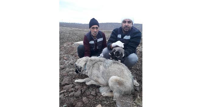 Bingöl'de anne köpek ve yavrusu koruma altına alındı