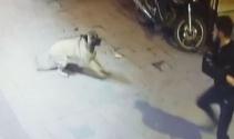 Magandalar köpeği bıçaklayıp, kemerle dövdüler...Dehşet anları kamerada