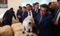 Buzağı ölümleri azalırsa, Türkiye et ihraç edebilecek