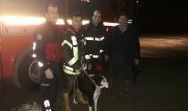 İtfaiyeden gece yarısı köpek kurtarma operasyonu