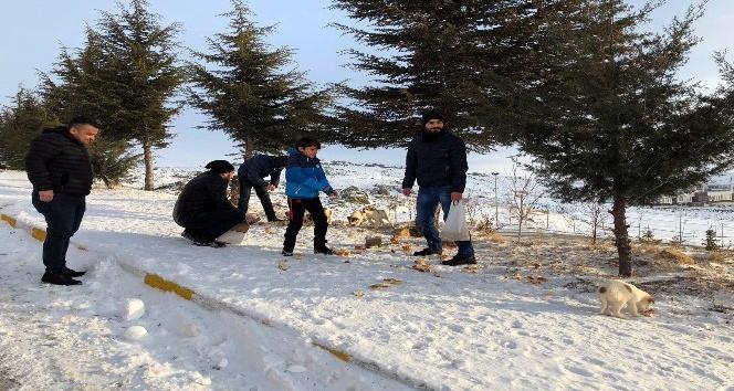 Yozgat'ta yaban hayvanlarına yem bırakıldı