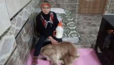 Buzağısı sağlığına kavuşan Hamdu Sena mutluluğunu babasının çektiği video paylaştı