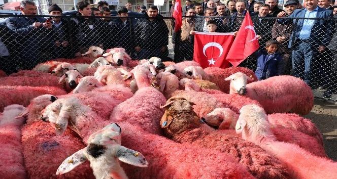 Yozgatlı çobanlar kınaladıkları kurbanları Mehmetçiğe gönderdi