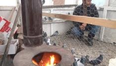 Ağrıda güvercinler soba ile korunuyor