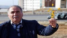 Yozgatta baharın müjdecisi çiğdem çiçekleri açtı