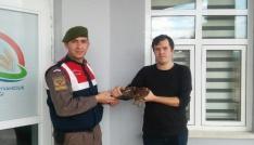 Avcıların bulduğu yaralı doğan Jandarmaya teslim edildi