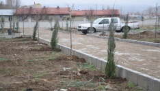 Şuhatta Asri mezarlığa 300 adet fidan dikildi