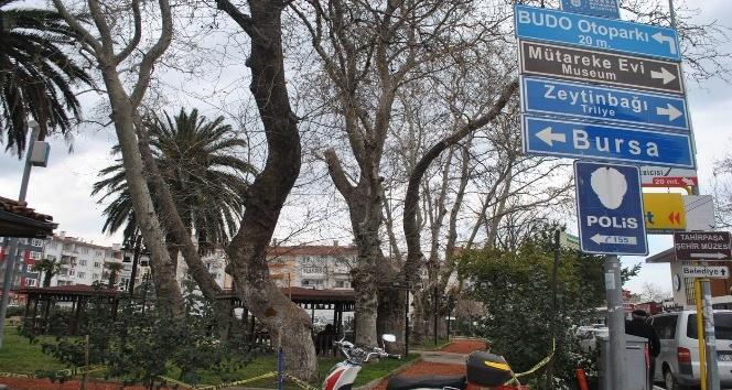Kuruyan dev ağaçlar tehlike saçıyor