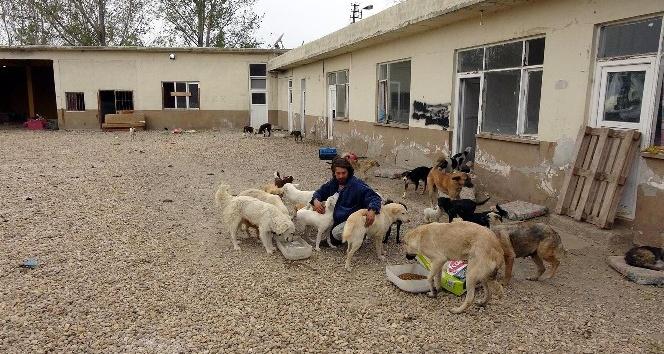 Hastane yemek artıkları sokak hayvanlarına gidiyor